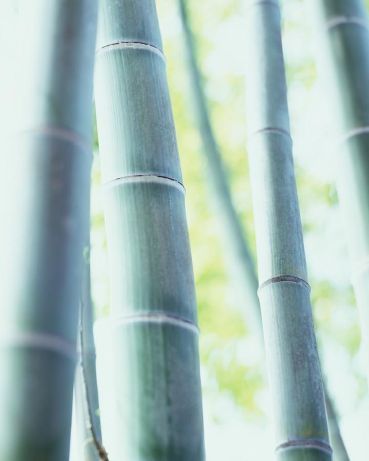xcg Aufrichtigkeit – Bambus